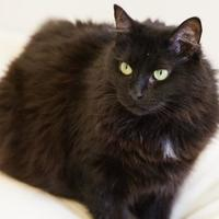 Adopt A Pet :: Sunshine - Cartersville, GA