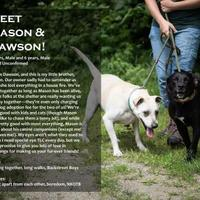 Adopt A Pet :: Mason - Farmington, ME