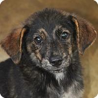 Adopt A Pet :: Forney Hull - Hooksett, NH
