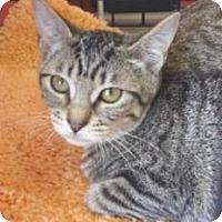 Adopt A Pet :: Snack Pack - Miami, FL