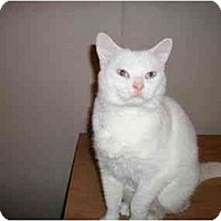 Adopt A Pet :: Abby - Muncie, IN