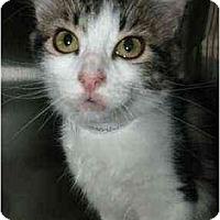 Adopt A Pet :: Ellie #1 - Lunenburg, MA