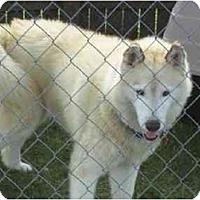 Adopt A Pet :: Keena - Belleville, MI