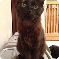 Adopt A Pet :: Brian - East Hanover, NJ