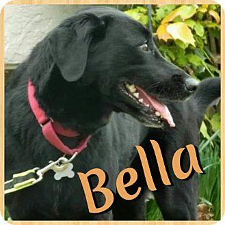 Labrador Retriever Mix Dog for adoption in Newnan, Georgia - Bella