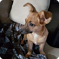 Adopt A Pet :: Pennie - Homewood, AL
