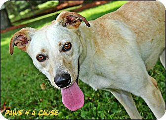 Labrador Retriever Mix Dog for adoption in Paducah, Kentucky - Loki