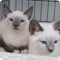 Adopt A Pet :: Ranier - Merrifield, VA