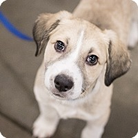 Adopt A Pet :: Blake - Minneapolis, MN