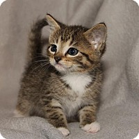 Adopt A Pet :: Curly - Helotes, TX