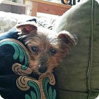 Adopt A Pet :: YOSHIE - Jackson, NJ