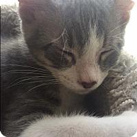 Adopt A Pet :: Eddie - Novato, CA