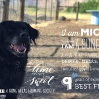 Adopt A Pet :: Mickie - The Dalles, OR
