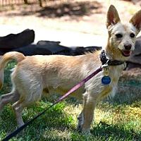 Adopt A Pet :: Mason - Penngrove, CA