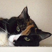 Adopt A Pet :: Gypsy - Denver, CO