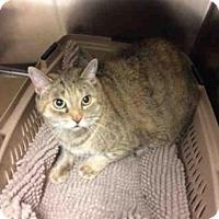 Adopt A Pet :: BELLE - Toronto, ON