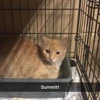 Adopt A Pet :: Summitt - Russellville, KY