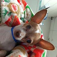 Adopt A Pet :: Pooky - Camden, DE