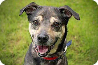 Shepherd (Unknown Type) Mix Dog for adoption in Marietta, Georgia - Chassis