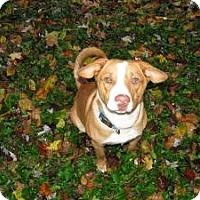 Adopt A Pet :: Manny - Paintsville, KY