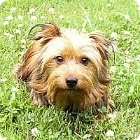 Adopt A Pet :: Jamie - Mocksville, NC