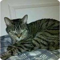 Adopt A Pet :: Chewbacca - Warminster, PA