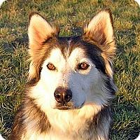 Adopt A Pet :: SAMSON - Boise, ID
