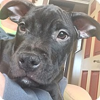 Adopt A Pet :: Raisin Bran - Southampton, PA