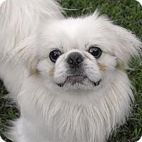 Adopt A Pet :: Peekaboo - Huntsville, AL
