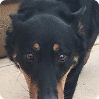 Adopt A Pet :: Roman - calimesa, CA