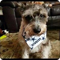 Adopt A Pet :: Brandon - Rexford, NY