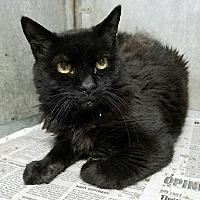 Adopt A Pet :: JoJo - Maryville, TN