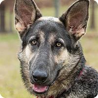 Adopt A Pet :: Toni - Dacula, GA