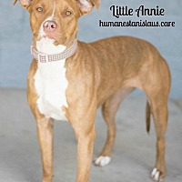Adopt A Pet :: LITTLE ANNIE - Modesto, CA