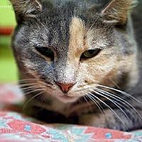 Adopt A Pet :: Aspen - Tucson, AZ