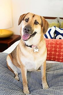 Shepherd (Unknown Type) Mix Dog for adoption in Dallas, Texas - Missy