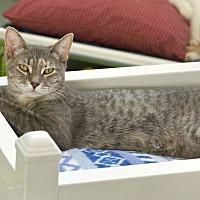 Adopt A Pet :: Xie-Xie - St Louis, MO