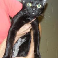 Adopt A Pet :: Josie - Jackson, MI
