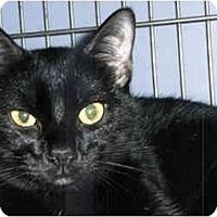 Adopt A Pet :: Anna - Medway, MA