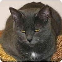 Adopt A Pet :: Nina - Markham, ON