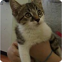 Adopt A Pet :: Dillinger - Troy, OH