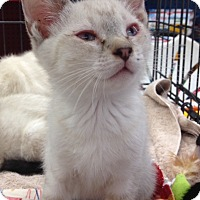 Adopt A Pet :: Corky - Redondo Beach, CA