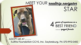 Pit Bull Terrier Mix Dog for adoption in Saylorsburg, Pennsylvania - Star
