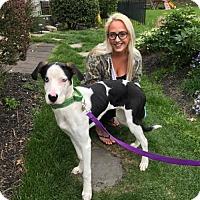 Adopt A Pet :: Ringo - Newfield, NJ