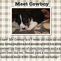 Adopt A Pet :: Cowboy - Sumter, SC