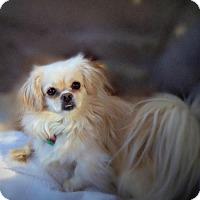 Adopt A Pet :: Daisy Rosebud - Little Rock, AR