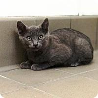 Adopt A Pet :: Celine - Lathrop, CA