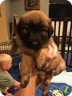 Terrier (Unknown Type, Small) Mix Puppy for adoption in Alpharetta, Georgia - Snoopy