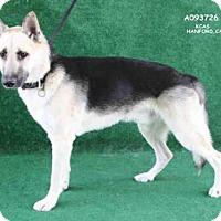 Adopt A Pet :: A093726 - Hanford, CA