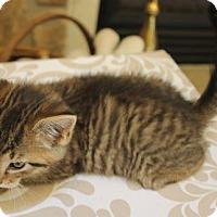 Adopt A Pet :: Elizabeth - Crossville, TN